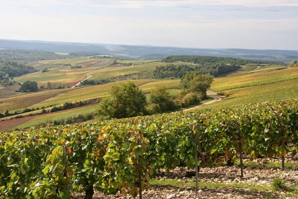Vignes en champagne sur les terroirs des Riceys, Olivier Horiot à la Cave Vavro & Co Lyon